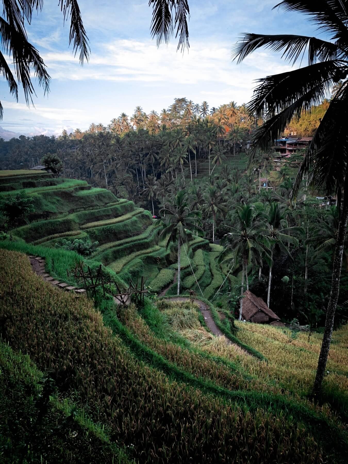 internship abroad bali indonesia