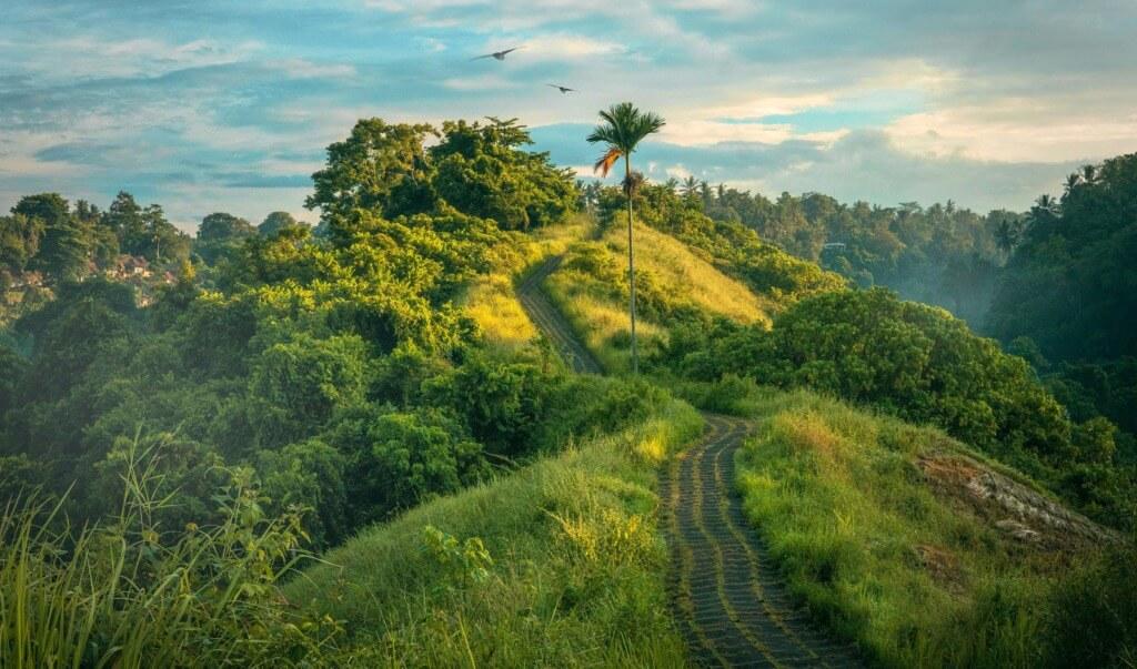 internship in Bali indonesia
