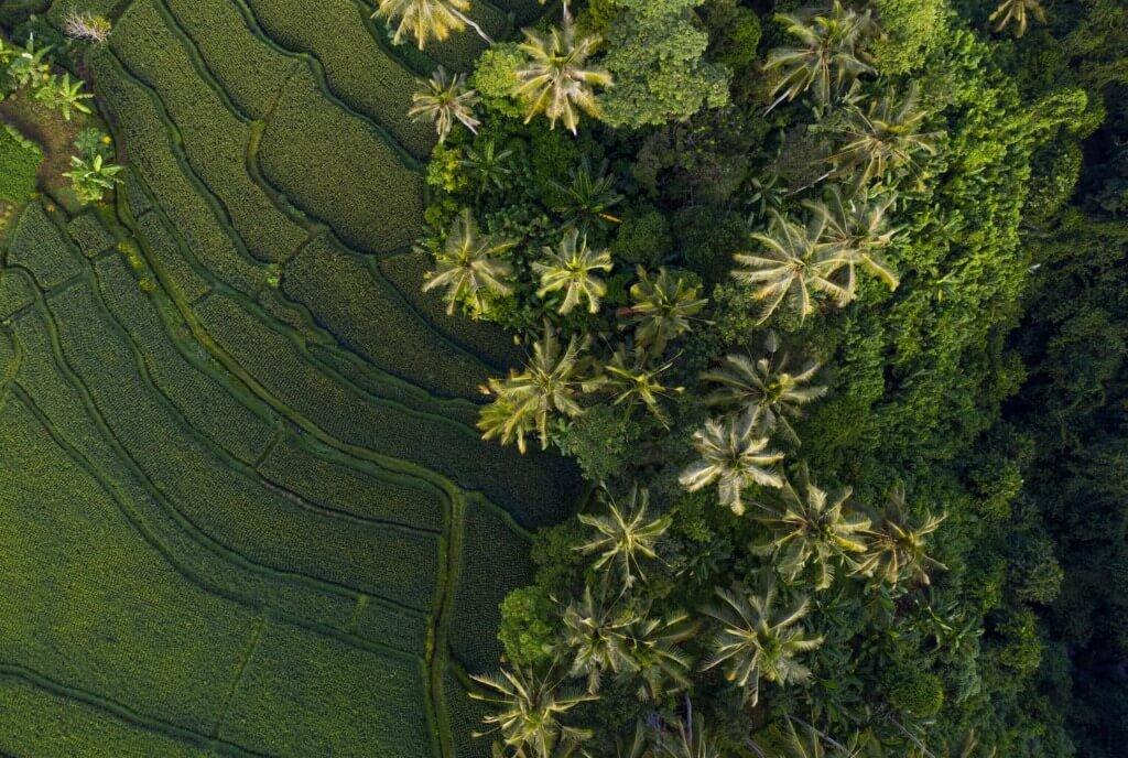 internship abroad Bali